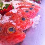 peixe-da-costa